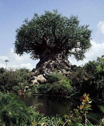 Tuesdays With Corey: Disney's Tree of Life 2