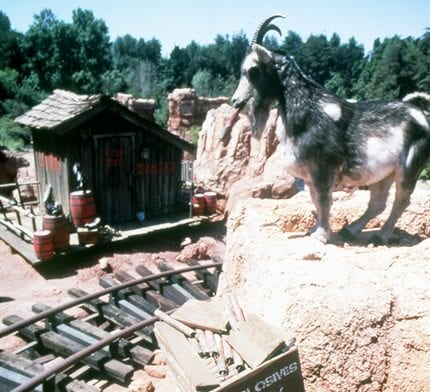 Baby Goats Make Their Debut at Disneyland Park 5
