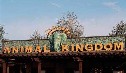How Well Do You Know… Disney's Animal Kingdom? 21