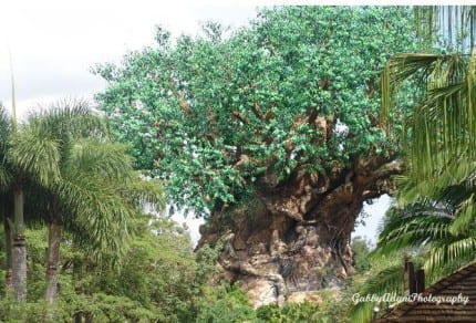 Tuesdays With Corey: Disney's Tree of Life 1