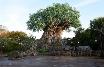 Tree of Life Grows New Roots at Disney's Animal Kingdom 8