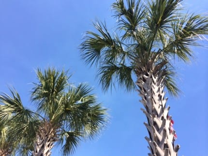 TMSM's Adventures in Florida Living ~ Is it Summer already? 23