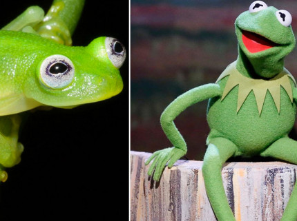 Kermit the Frog Reacts to His Newly Discovered Lookalike 14