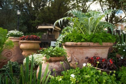 How to Grow Amazing Container Gardens Seen at Walt Disney World Resort 3