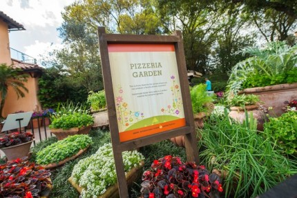 How to Grow Amazing Container Gardens Seen at Walt Disney World Resort 4