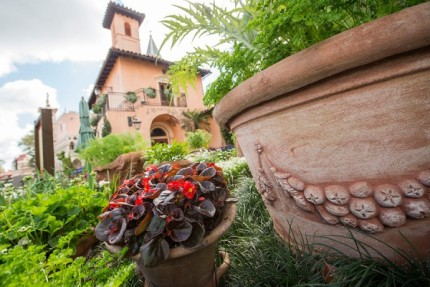 How to Grow Amazing Container Gardens Seen at Walt Disney World Resort 5