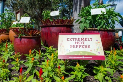 How to Grow Amazing Container Gardens Seen at Walt Disney World Resort 6