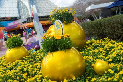How to Grow Amazing Container Gardens Seen at Walt Disney World Resort 10