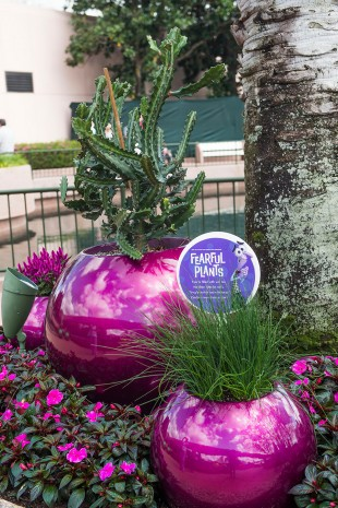 How to Grow Amazing Container Gardens Seen at Walt Disney World Resort 11