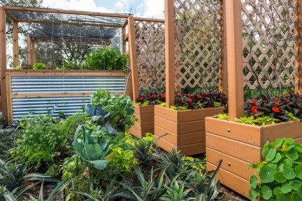 How to Grow Amazing Container Gardens Seen at Walt Disney World Resort 15