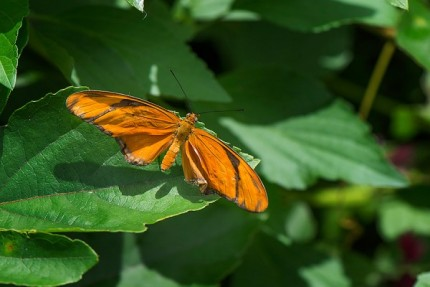 Build Your Own Butterfly Garden with Tips from Epcot International Flower & Garden Festival 2