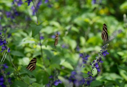 Build Your Own Butterfly Garden with Tips from Epcot International Flower & Garden Festival 3