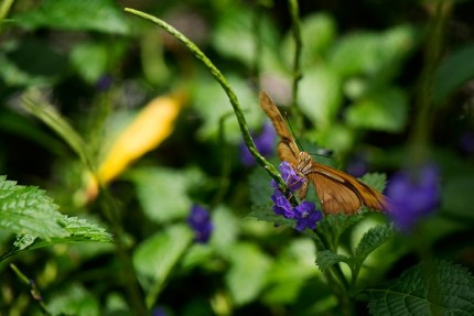 Build Your Own Butterfly Garden with Tips from Epcot International Flower & Garden Festival 5