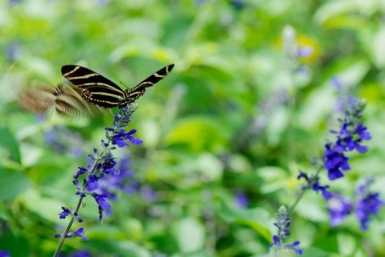 Build Your Own Butterfly Garden with Tips from Epcot International Flower & Garden Festival 7