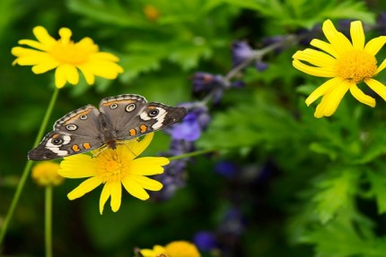 Build Your Own Butterfly Garden with Tips from Epcot International Flower & Garden Festival 8