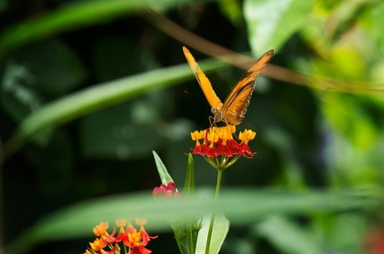 Build Your Own Butterfly Garden with Tips from Epcot International Flower & Garden Festival 11