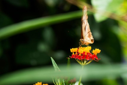 Build Your Own Butterfly Garden with Tips from Epcot International Flower & Garden Festival 12