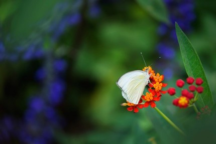 Build Your Own Butterfly Garden with Tips from Epcot International Flower & Garden Festival 15