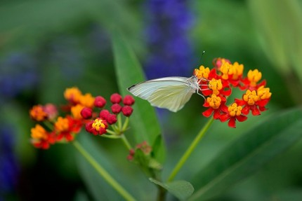 Build Your Own Butterfly Garden with Tips from Epcot International Flower & Garden Festival 10