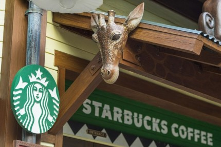 Disney's Animal Kingdom's Starbucks Opens, Flat White Lattes To Help Endangered Species 2