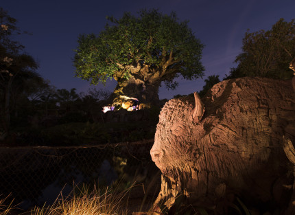 At Disney's Animal Kingdom, the park's iconic Tree of Life has grown new roots. Featuring new animals that make up the circle of life, from tiny bugs to large crocodiles, the expanded roots also offer a widened walkway for guests visiting Discovery Island. The 145-foot tall structure is covered in more than 103,000 leaves and debuted as the park's icon at the park's opening in 1998. Disney's Animal Kingdom is located at Walt Disney World Resort in Lake Buena Vista, Fla. (Todd Anderson, photographer)