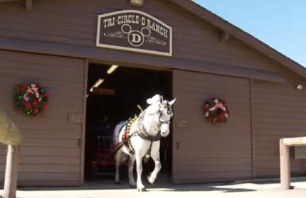 Holiday Horse at Walt Disney World Resort has a Holiday Secret! 39