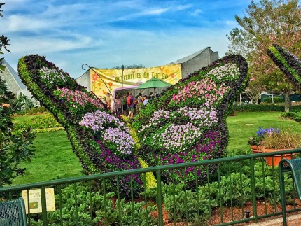 Butterflies On the Go! Epcot Flower and Garden Festival! 13