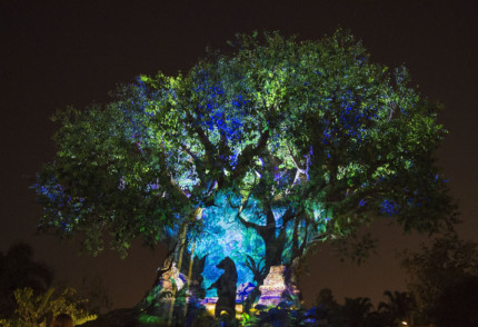 Get Ready to #AwakenSummer at Walt Disney World Resort This Memorial Day Weekend 6
