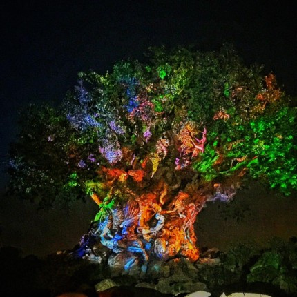 Tree of Life Awakenings, Animal Kingdom (Video) 2