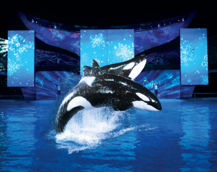 SeaWorld's Christmas Celebration Brightens The Holidays #OffTMSM 6