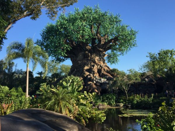 Disney's Conservation Efforts and Earth Day Re-Cap at Animal Kingdom 8
