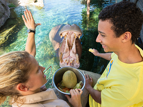 Registration is now open for busch gardens tampa and - Busch gardens florida resident discount ...