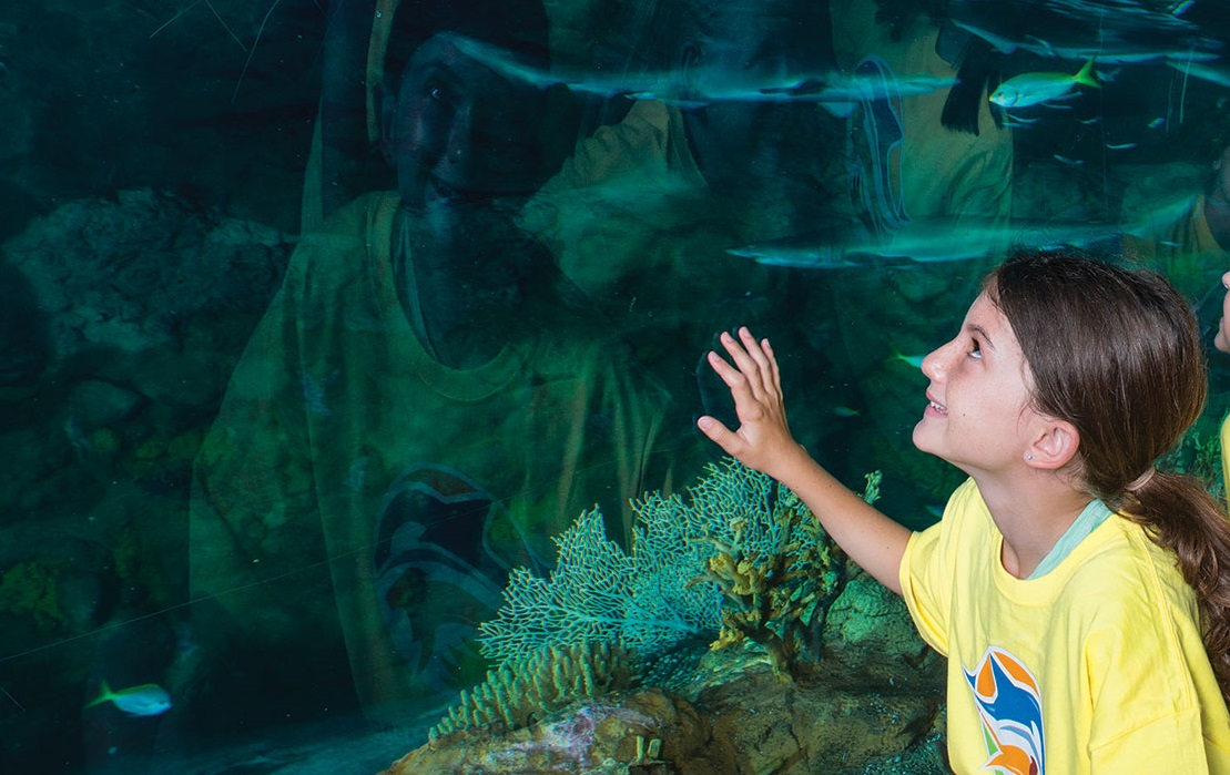 SeaWorld Orlando's Summer Day Camp Registration Is Now Open! 11