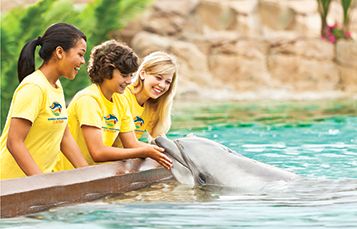 Registration Is Now Open For Busch Gardens Tampa And Seaworld