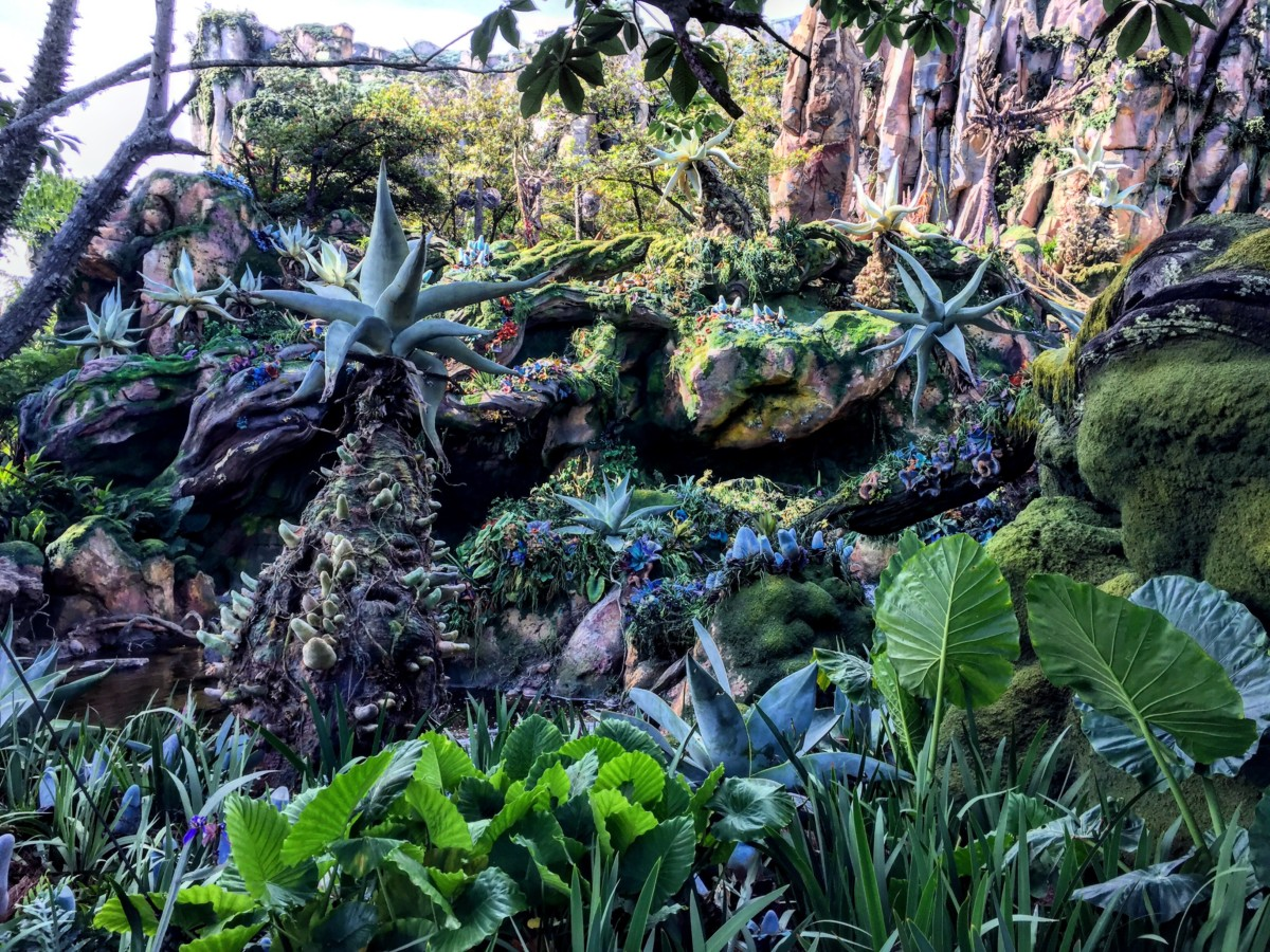TMSM's Adventures in Florida Living ~ Beyond Busy, but Beyond Thankful! #disneylife #visitpandora 3