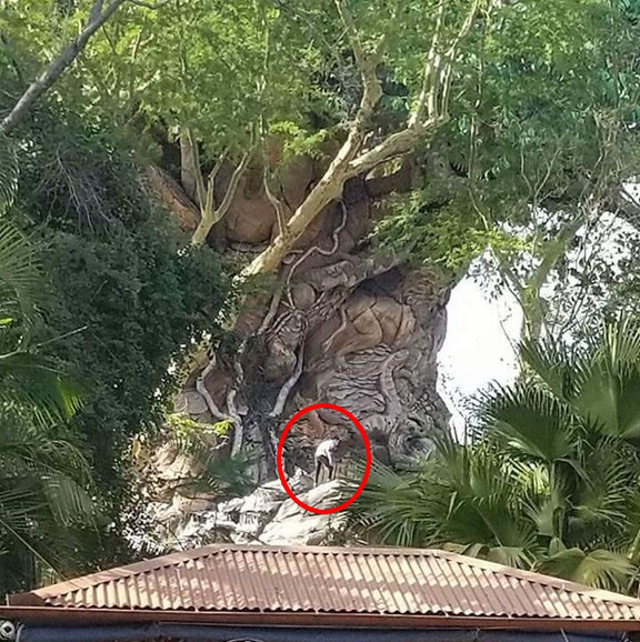 Guests Climb The Tree Of Life
