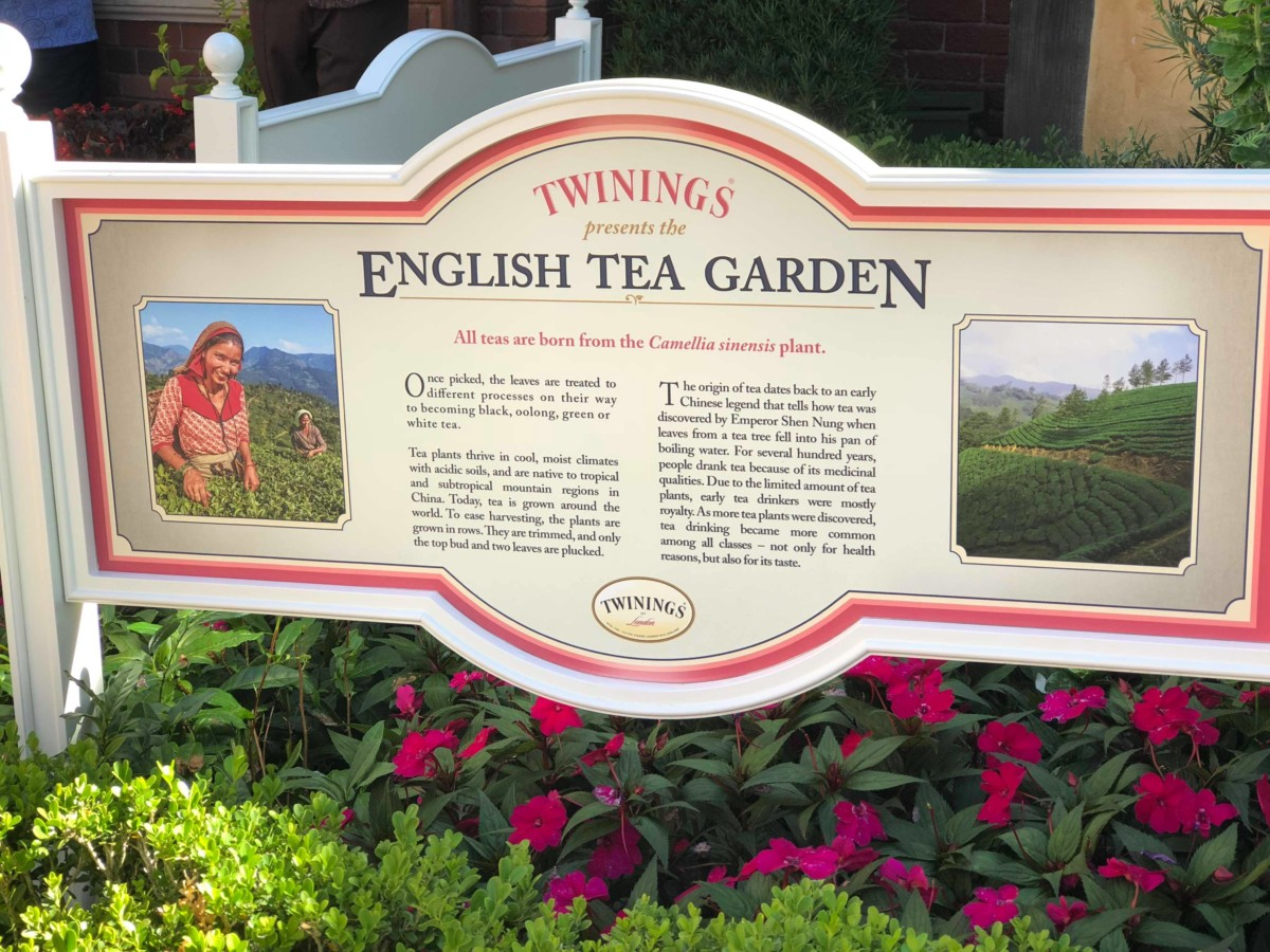 No Scones About It - Review Of The Tea Garden Tour At Epcot 2