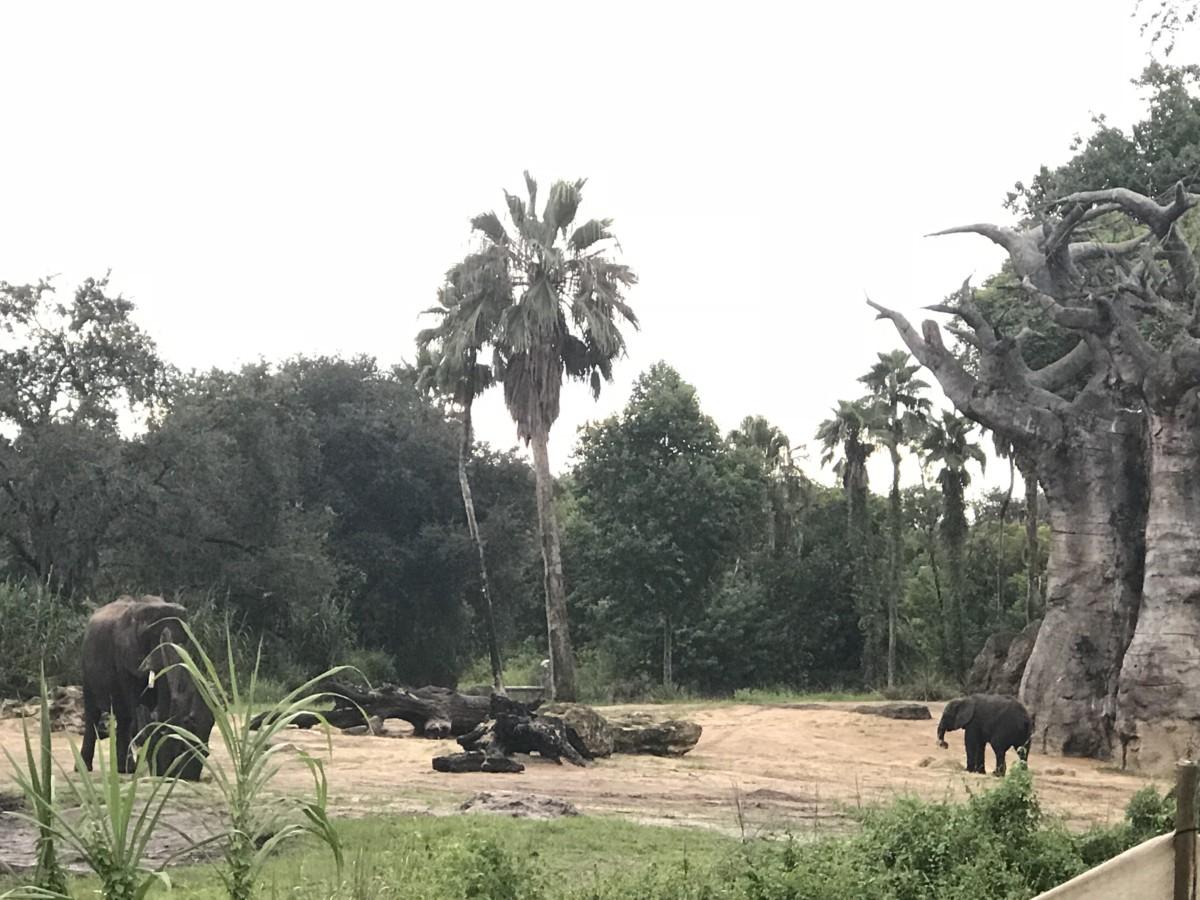 Take a Ride on Kilimanjaro Safaris 7