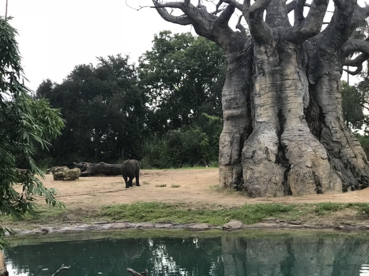 Take a Ride on Kilimanjaro Safaris 8