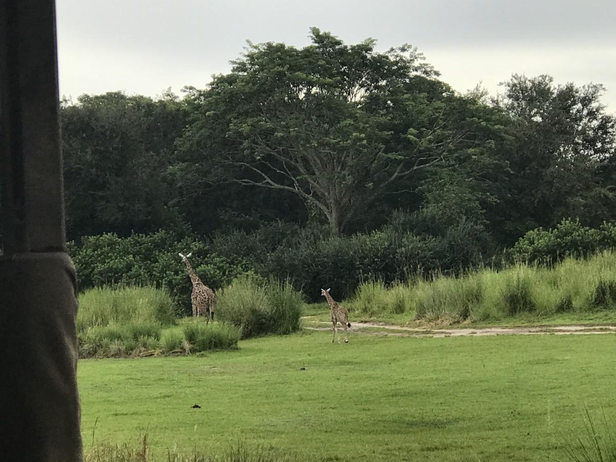 Take a Ride on Kilimanjaro Safaris 3