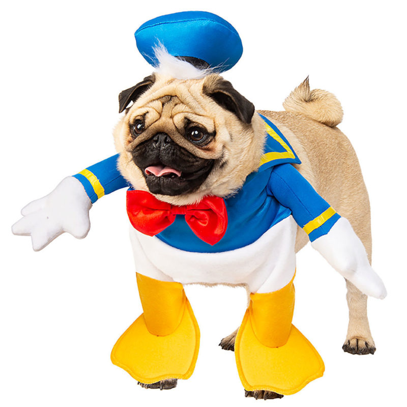 Pet Costumes With Disney Style! 1