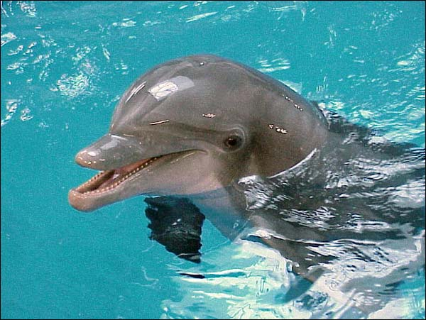 You can meet a real life Dolphin at EPCOT? 7