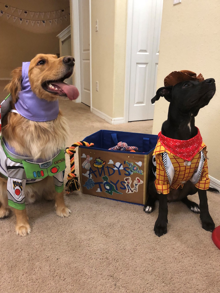 Disney Springs Cast Members' Pets Are Dressed To Impress in Costumes Perfect for Halloween and Beyond 4