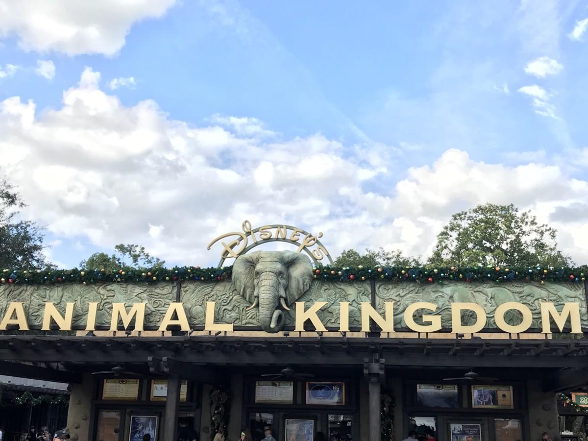 Holiday Decor at Animal Kingdom 8